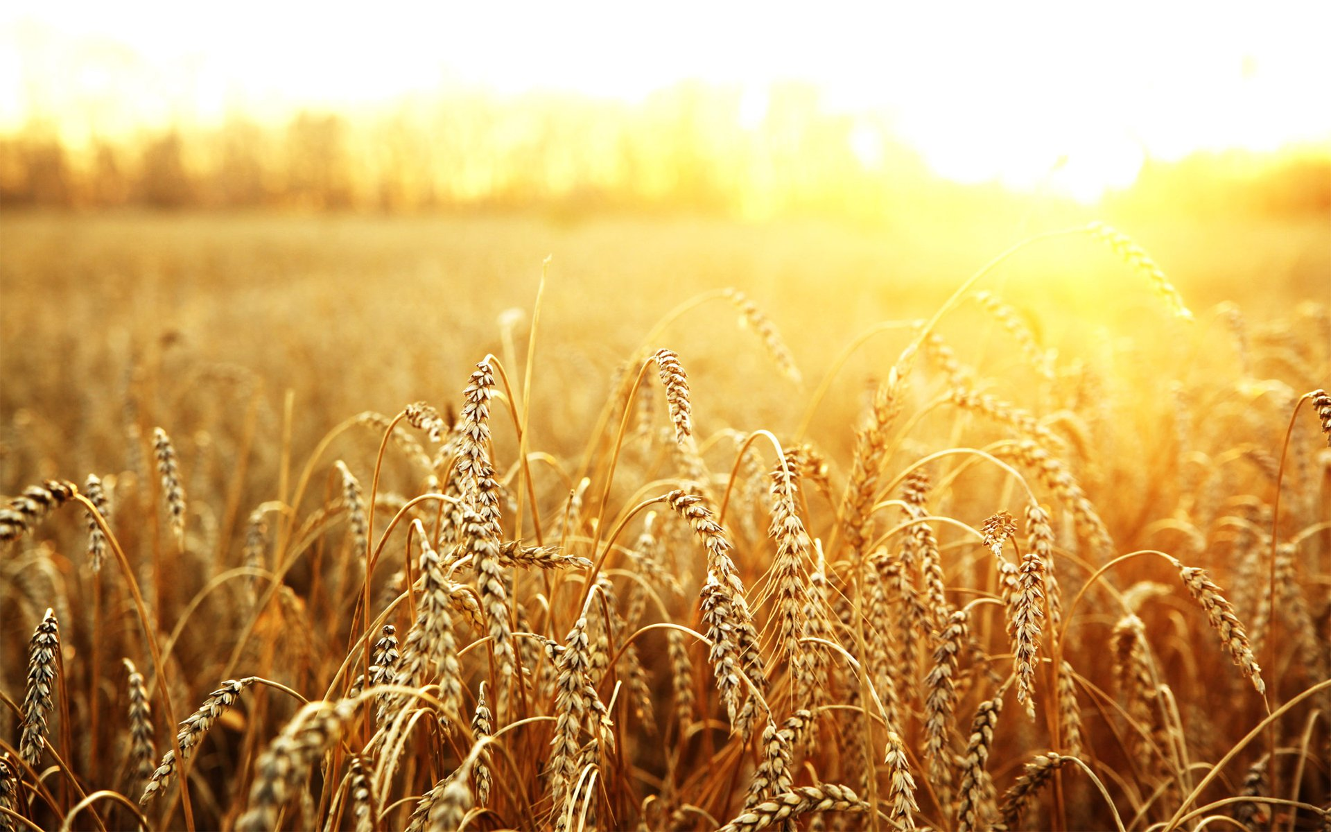 Ukraine will reduce the production of wheat and barley
